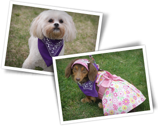 Events: Bark For Life