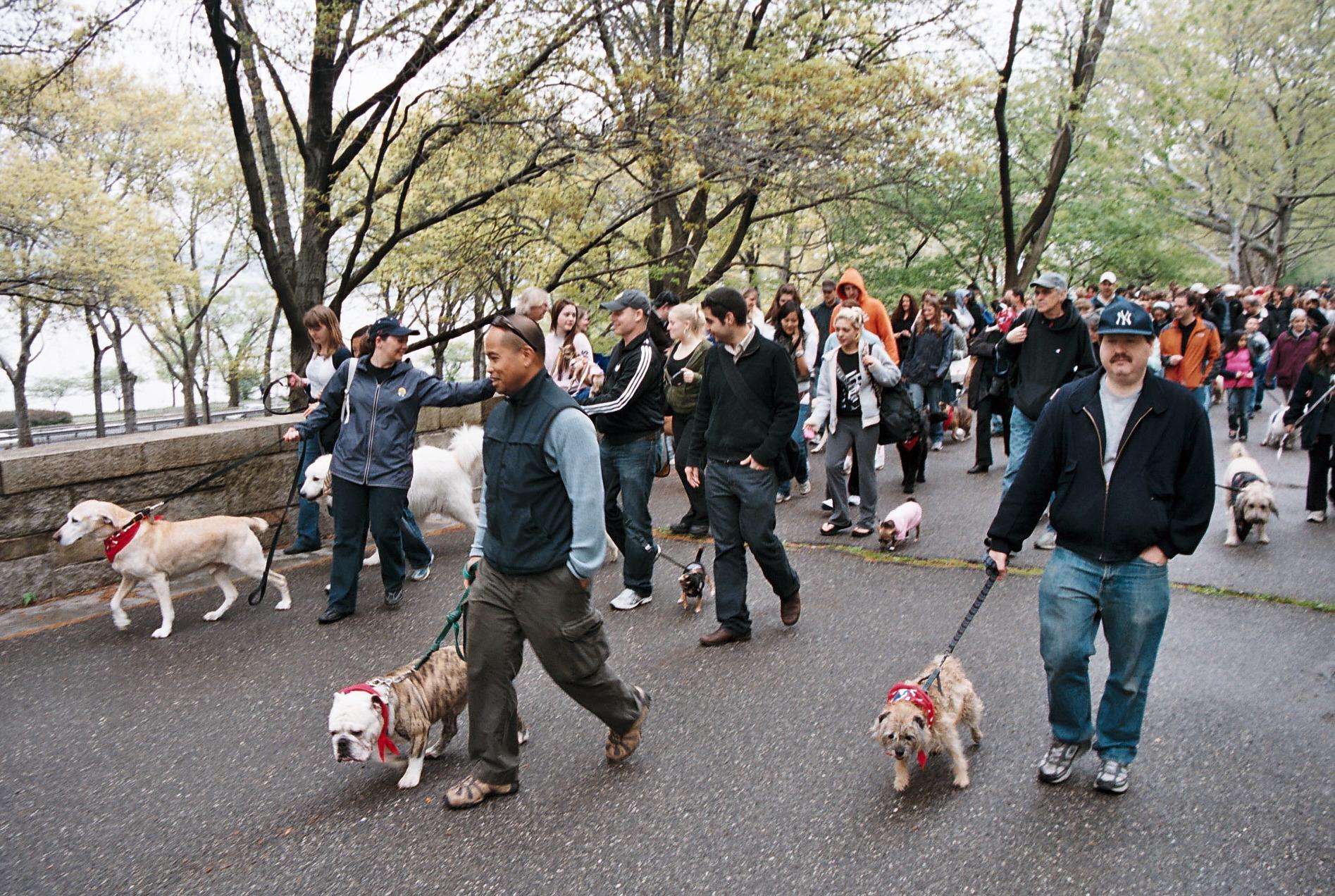 dogswalk walkers